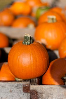 Free Pumpkin Crate Royalty Free Stock Photography - 16169717