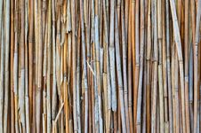 Dry Stalks Of A Reed Stock Photography