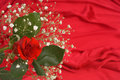 Free Baby S Breath And Rose On Red Satin Royalty Free Stock Photo - 16171675