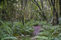 Free Waikawa Bush Track Royalty Free Stock Photo - 16172195