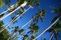 Free Shady Palms In Fiji Royalty Free Stock Photo - 16174165