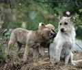Free Happy Dog Stock Image - 16177461
