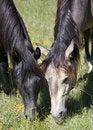 Free Horses Royalty Free Stock Photo - 16178195