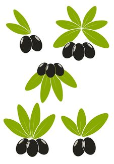Free Olives With Leaves Stock Photography - 16170922