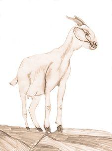 Free Nanny Goat Stock Images - 16171684