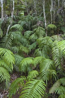 Free Fern Covered Track Royalty Free Stock Images - 16172109