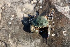 Free Crab Royalty Free Stock Photo - 16172305