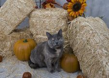 Free Cat In Fall Setting Stock Photography - 16172422