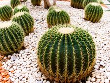 Free Various Cactus Species Stock Photo - 16172440