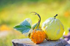 Free Harvested Pumpkins Stock Images - 16173554