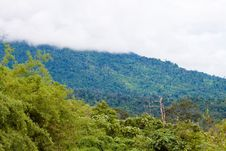 Free Tropical Forest Royalty Free Stock Images - 16173569