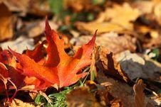 Free Fallen Autumn Leaf Stock Photos - 16173633
