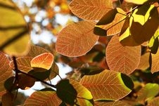 Free Colored Autumn Leaves Stock Images - 16173634