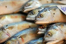 Free Mackerel In The Market. Royalty Free Stock Images - 16173939