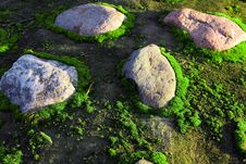 Free Moss And Stones Royalty Free Stock Photos - 16173968