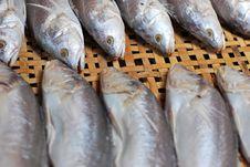 Free Mackerel In The Market. Royalty Free Stock Photo - 16173975