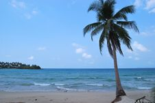 Free Sea And Coconut Palm , Thailand Stock Photo - 16174130