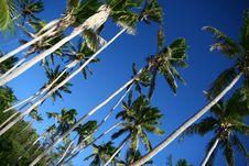 Shady Palms In Fiji Royalty Free Stock Photo