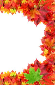 Half Frame From Autumn Maple Foliage Royalty Free Stock Photos