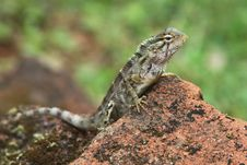 Free Reptile Royalty Free Stock Photography - 16174187