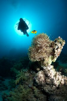 Free Silhouette Of Scuba Diver Above Coral Reef Royalty Free Stock Photo - 16175075