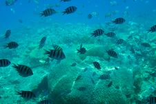 Free Underwater Landscape Of Red Sea. Royalty Free Stock Images - 16175349