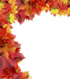 Free Frame From Autumn Maple Foliage Royalty Free Stock Photo - 16175865