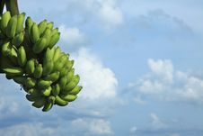 Free Banana Fruits Stock Photos - 16175903