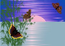 Free Bamboo And Butterflies At Sunset Royalty Free Stock Photo - 16176965