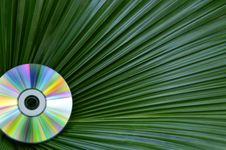 Free Colorful CD Against Palm Leaf Stock Photography - 16178182