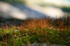 Free Close-up Green Moss Royalty Free Stock Images - 16178809