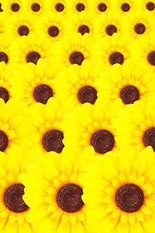 Free Beautiful Yellow Sunflower Stock Photo - 16179160