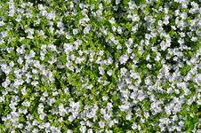 Free Flower Background Stock Photo - 16179860