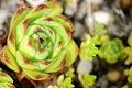 Free Hydrangea Royalty Free Stock Photography - 16184807