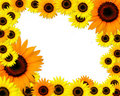 Free Sunflowers Frame With Place For You Text Stock Image - 16185811