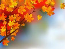 Free Autumn Yellow Leaves, Shallow Focus. Royalty Free Stock Photo - 16182055