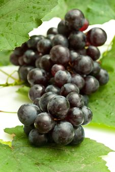 Free Bunch Of Grapes Stock Photos - 16182463