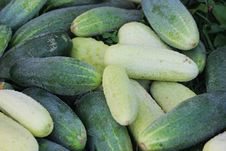 Free Miscellaneous Cucumbers. Stock Images - 16183694