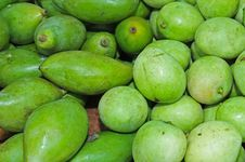 Free Green Mangoes Royalty Free Stock Photography - 16185527