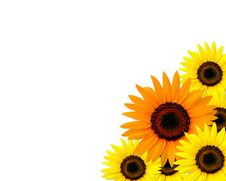 Free Sunflowers Frame With Place For You Text Stock Photos - 16185743