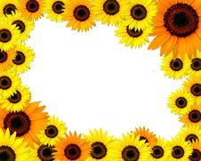 Free Sunflowers Frame With Place For You Text Stock Photo - 16185790
