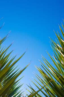Free Sky With Palm Leaves On Two Sides Stock Images - 16185894