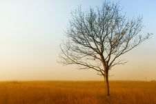 Free Alone Tree On The Field,in Autumn Royalty Free Stock Photos - 16186618