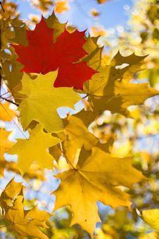 Free Autumn Stock Photo - 16186890