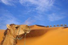 Trip To The Desert Royalty Free Stock Photos