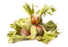 Free Four Hazelnuts Stock Photography - 16187902