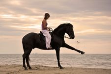 Free Girl And  Horse On The Beach Royalty Free Stock Photos - 16188318