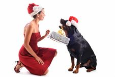 Free Rottweiler, Gift And Woman Stock Photography - 16188572