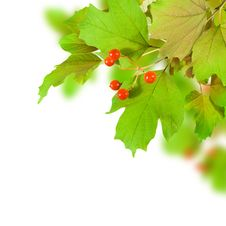Free Leaf Royalty Free Stock Photography - 16189277