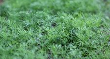 Free Fresh Greens. Stock Photos - 16189363